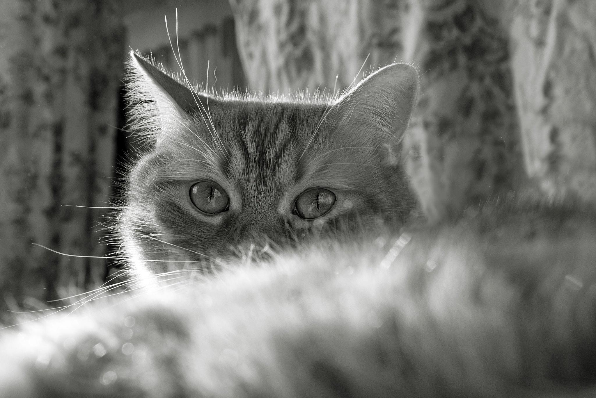fot. Agnieszka Harna